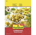 Physalis, seminte de legume Physalis FloraSelf Select pruinosa 'Goldmurmel'