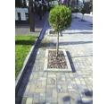 Bordura B2 ciment 12x25x50 cm