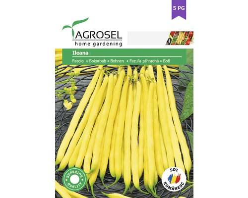 Seminte de legume, fasole Ileana