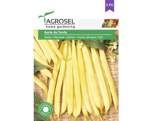 Seminte de legume, fasole aurie de Turda