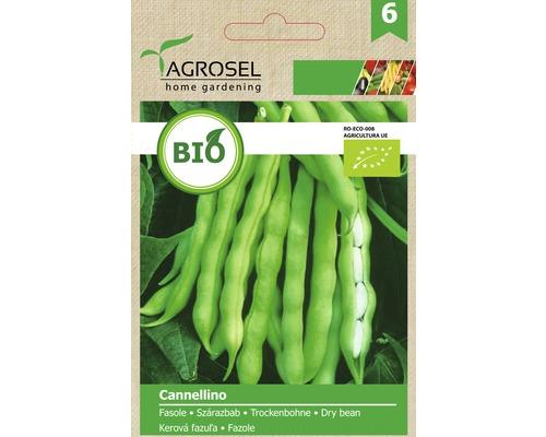 Seminte de legume, fasole Cannellino Bio