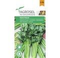 Seminte de legume, telina frunze Pascal Giant