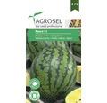 Seminte de legume, pepene verde