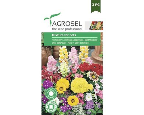 Seminte de flori, mix jardiniere