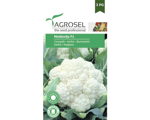 Seminte de legume, conopida Moldovita