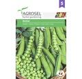 Seminte de legume, mazare Bordias