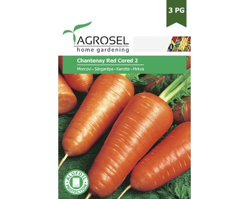 Seminte de legume, morcovi Chatenay rosii