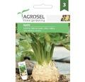 Seminte de legume, telina Apollo