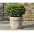 Ghiveci Lafiora Big Pot teracota, Ø 45 cm, maro