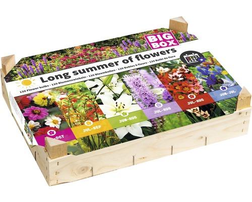 Cutie din lemn - amestec flori de vara tarzie, 120 buc.