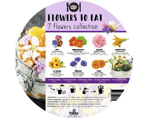 Set 7 plante de flori comestibile