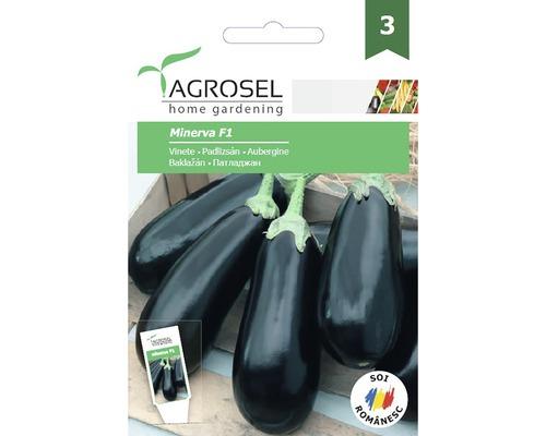 Seminte de legume vinete Minerva F1 PG3