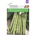 Seminte de fasole IZA Agrosel