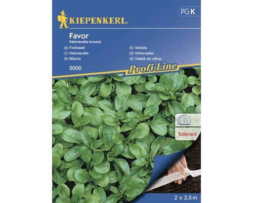 Seminte de salata de camp la banda Kiepenkerl