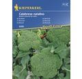 Seminte de legume Kiepenkerl, broccoli Calabrese Natalino