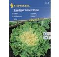 Semințe de legume Kiepenkerl, Andive Breedblad