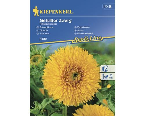 Seminte de floarea-soarelui pitica Kiepenkerl