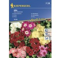 "Semințe de flori Kiepenkerl mix Phlox ""Brumărele"""