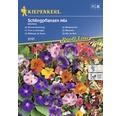 Semințe de flori de grădină cățărătoare Kiepenkerl