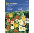 Seminte de flori Kiepenkerl mix pastelat maci