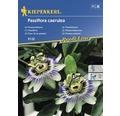 Semințe de flori Kiepenkerl, Floarea Pasiunii