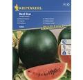 Seminte de legume Kiepenkerl, pepene verde Red Star 1