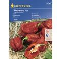 Semințe de legume Kiepenkerl, ardei iute Habaneo roșu