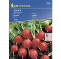 Seminte de legume Kiepenkerl, ridichi Saxa 3