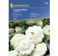 Semințe de legume Kiepenkerl, dovlecel alb Custard