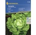 Semințe de salată frunze Dynamite Kiepenkerl