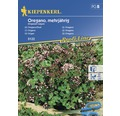 Seminte de plante aromatice Kiepenkerl, oregano