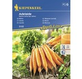 Seminte de legume Kiepenkerl, morcovi Adelaide
