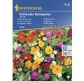 Semințe de flori parfumate Kiepenkerl