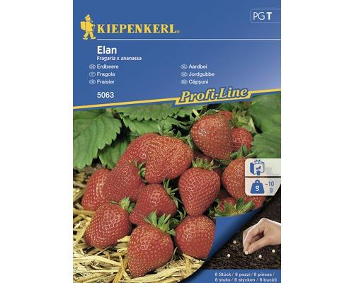 Seminte de capsuni Elan Kiepenkerl