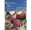 Seminte de legume Kiepenkerl, cicoare Radicchio Indigo