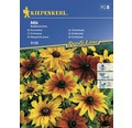Seminte de flori Kiepenkerl mix Echinacea