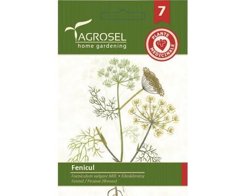 Seminte de fenicul Agrosel
