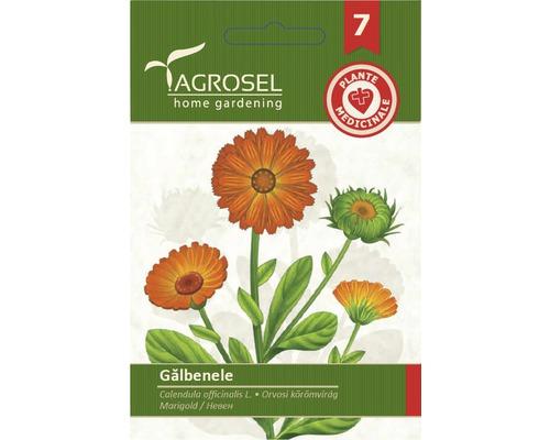 Seminte de Galbenele PG 7 Agrosel