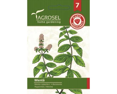 Seminte de plante aromatice Agrosel, menta