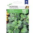 Seminte de mustar PG8 Agrosel