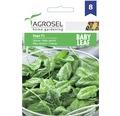 Seminte de legume Agrosel, spanac Saga F1 Baby Leaf PG8
