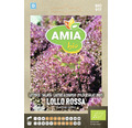 Seminte Bio salata Lollo Rosa