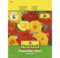 FloraSelf seminte de conduras Tip Top Mix