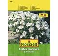 FloraSelf seminte de flori Gascarita