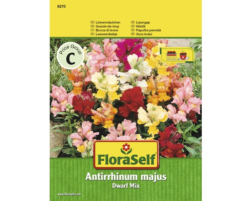 """FloraSelf seminte de flori gura leului """"Antirrhinum majus"""""""