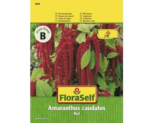 """FloraSelf seminte de flori motul curcanului """"Amaranthus caudatus"""""""