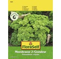 FloraSelf seminte de patrunjel cret Mooskrause 2