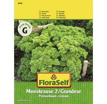 FloraSelf semințe de pătrunjel creț Mooskrause 2