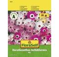 """FloraSelf seminte de flori """"Dorotheanthus bellidiformis"""""""