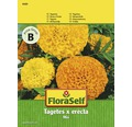 "FloraSelf seminte de flori mix craite ""Tagetes x erecta"""